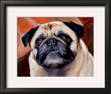 Snaggle Pug Print by Robert Mcclintock