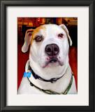 Sonny American Bulldog Prints by Robert Mcclintock