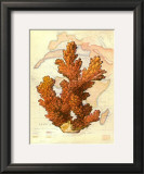 Exotic Map with Coral III Prints by Deborah Bookman