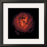 Ranunculus no. 44 Prints by Neil Seth Levine