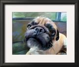Walrus Pug Poster by Robert Mcclintock