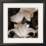 White Lilies Prints by Rebecca Swanson