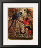 Tropical Birds III Prints by  Cassel