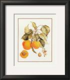 Abricot Peche Art