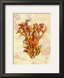 Exotic Map with Coral II Prints by Deborah Bookman