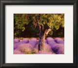 Provence Prints by Bryan F. Peterson