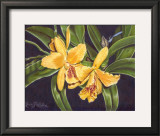Vibrant Orchid I Poster by Gloria J. Callahan