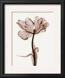 Parrot Tulips I Prints by Steven N. Meyers