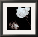 Two Roses Print by Angelos Zimaras