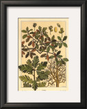 Oak Tree Poster by M. P. Verneuil
