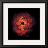 Ranunculus no. 43 Prints by Neil Seth Levine