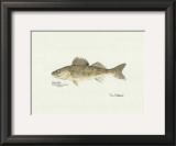 Walleye Fish Art by Ron Pittard