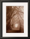 Enchanted Path Posters by Paul Kozal