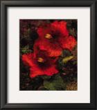 Hibiscus II Prints by John Seba