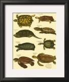 Oken Tortoise Print by Lorenz Oken