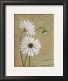 Daisies Posters by Pamela Desgrosellier