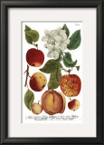 Weinmann Fruits I Posters by  Weimann