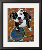 Happy Staffie Poster by Robert Mcclintock