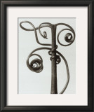 Curcubita, Pumpkin Tendril Prints by Karl Blossfeldt