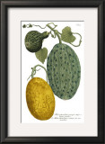 Antique Melons II Prints by Weimann