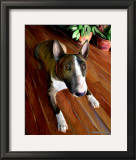 Bull Terrier Down Prints by Robert Mcclintock