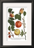 Weinmann Fruits IV Prints by Weimann 