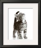 Curious Cat Prints