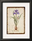 Iris Reticulata Art by Lisa Canney Chesaux