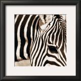 Zebra Pattern Prints by Frank & Susann Parker