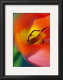 Tulipe V Prints by Marc Ayrault