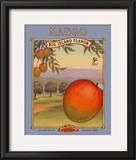 Mango Prints