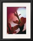 Prunus III Posters by Marc Ayrault