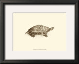 Sepia Turtle I Prints by J. H. Richard