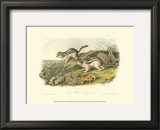 Marmot Squirrel Poster by John James Audubon