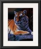 Bengal Tiger Print by Daniel Smith