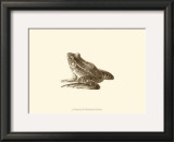Sepia Frog I Poster by J. H. Richard