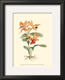 Orange Orchid Print by Joy Waldman