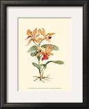 Orange Orchid Print by Joy Waldman