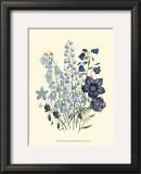 Loudon Florals IV Prints by Jane W. Loudon