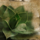Succulent II Print by Patricia Quintero-Pinto
