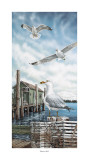 Seagull Key Prints by James Harris