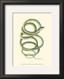 Vibrant Snake II Art by Frederick P. Nodder