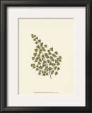Woodland Ferns II Posters by Edward Lowe