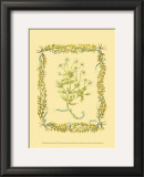 Chamomile Print by Wendy Russell