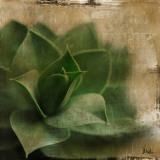 Succulent II Prints by Patricia Quintero-Pinto
