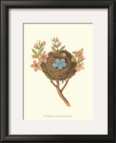Antique Bird's Nest I Posters by James Bolton