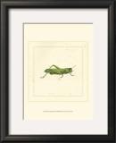 Green Hopper Prints