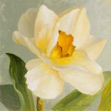 Daffodil Sky I Poster by Lanie Loreth