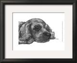Charlie the Cocker Spaniel Prints by Beth Thomas