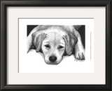 Kailie the Yellow Lab Prints by Beth Thomas